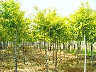 北京市推广三十七个植物良种 表现不良随时退出