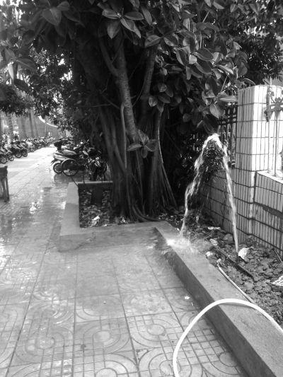 """海师大龙昆南校区:自来水管爆裂成了""""喷泉"""""""