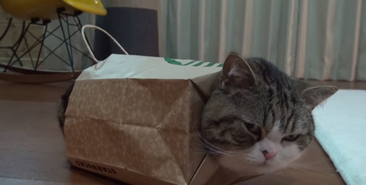 """日本""""纸袋猫""""爆红网络被调侃引领新时尚(图)"""