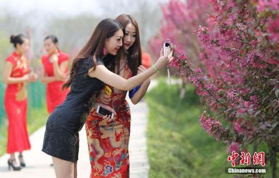南京多位美女身穿旗袍赏海棠 顾盼生姿秀身段