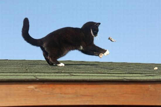 现实版《猫和老鼠》:英建筑顶上演猫戏鼠大戏【组图】【4】