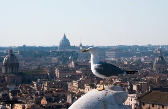 意大利首都 - 罗马 �C 罗马是欧洲最浪漫的学生城市之一。这里是一个阳光普照的城市,美丽的鸽子点缀着安逸舒适的广场,欣赏着周围美景,与心爱的人一起喝上一杯爱思巴苏特浓咖啡是一种莫大的享受。