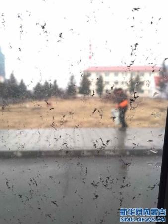内蒙古阿尔山现红色天空下泥雨 雨水含黑色物质