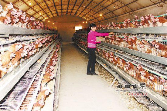 榆中农村妇女v农村贷款助力兰州小额妇女发展种的视频开宾利图片