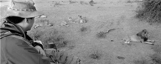 星巴在看护动物 狮子王来了! 这个狮子王叫星巴,非电影《狮子王》里的那个辛巴。星巴是贵州人,今年42岁,原名卓强,他是第一个深入非洲全职做野生动物保护特别是保护狮子的中国人,第一个在非洲注册NGO(非政府组织)的中国人,现为马拉野生动物保护公益基金会主席。 昨天他来到杭州西溪阿里巴巴淘宝城,成为阿里自然大讲堂的公益讲课人,带来他和非洲狮子的故事。 从小我做梦都想变成狮子 大学学外语是为了去非洲草原 还是孩子的时候,卓强就特别喜欢狮子。我小时候有部挺红的动画片《森林之王》,我一看到里面的小白狮