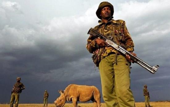 世界最后一头雄性北白犀牛获全天候武装保卫