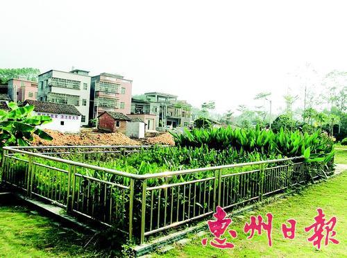 罗阳镇田牌村人工湿地净化池。