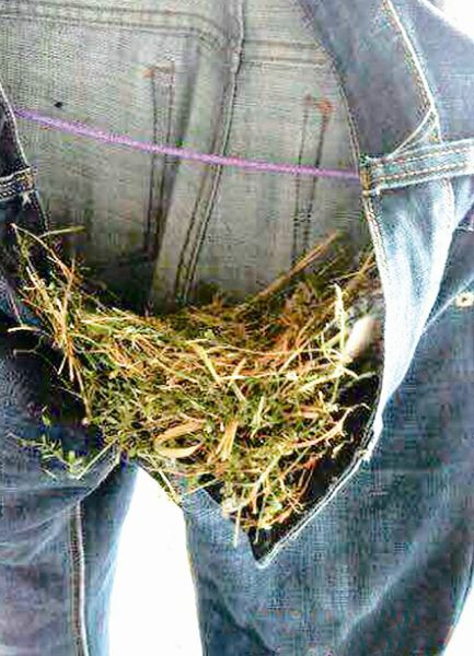 鸟儿在牛仔裤里筑巢 读者供图