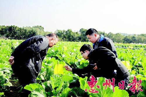 一菜园采用有色板防治病虫害,减少农药使用。