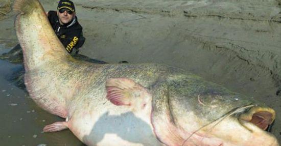 波兰渔民捕获巨型鲇鱼 腹内发现纳粹军官遗体