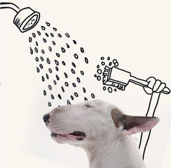 赞!巴西艺术家脑洞大开对狗狗进行艺术创作【组图】