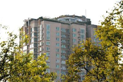 昨日,人济山庄楼顶,大片绿色植被高出了楼顶围墙一小截。 新京报记者 吴江 摄