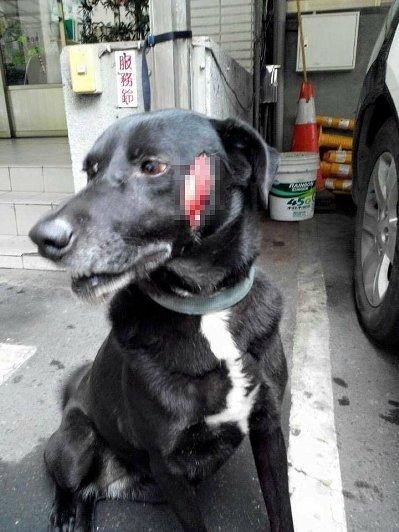 网友控诉狗狗被陌生人砍伤发布照片求缉凶(图)