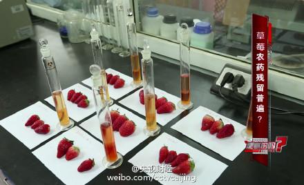 曝草莓种植普遍使用违禁农药 长期食用或致癌