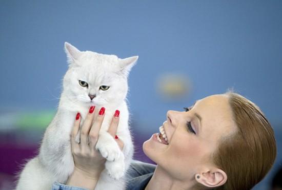 罗马尼亚举行国际猫咪展 稀有猫咪争奇斗艳