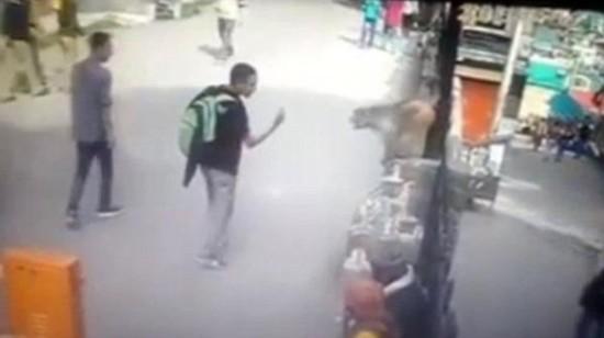 印度少年竖中指 遭猴子飞脚踹脸倒地(组图)