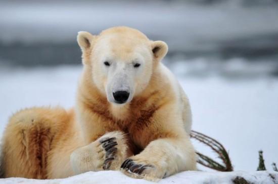 英夫妇加拿大旅游误把北极熊认成大狗