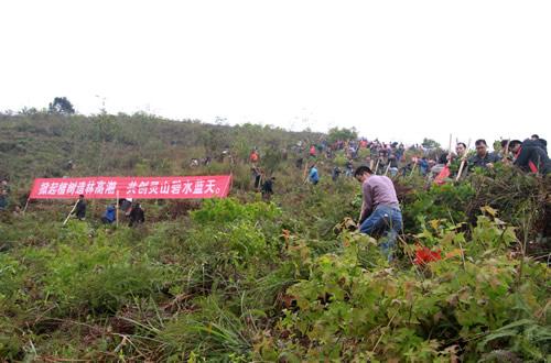 灵山县组织开展2015年春季义务植树活动