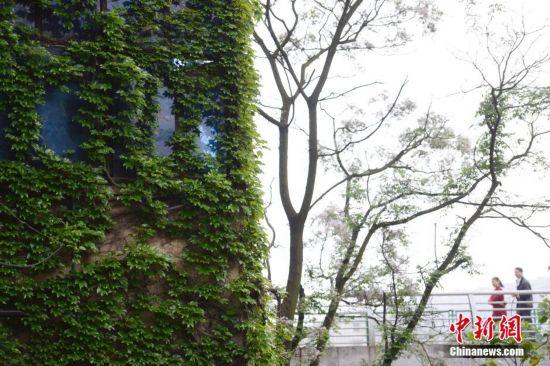 福建泉州任性土豪打造 钱币 围墙