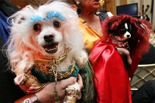 """图为主人为狗狗办的""""婚礼""""。"""