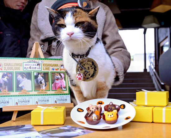 日本为猫站长庆16岁生日相当人类80岁高龄(图)