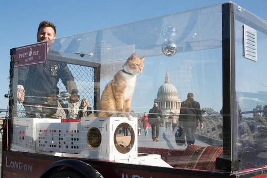 宠物店老板为庆新店开张带猫咪骑行480公里(图)【3】