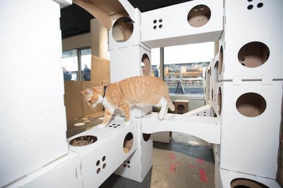 宠物店老板为庆新店开张带猫咪骑行480公里(图)【5】