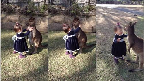两岁女童向小袋鼠示好获善意回应画面有爱(图)