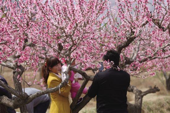 海东:百花争艳成游客首选