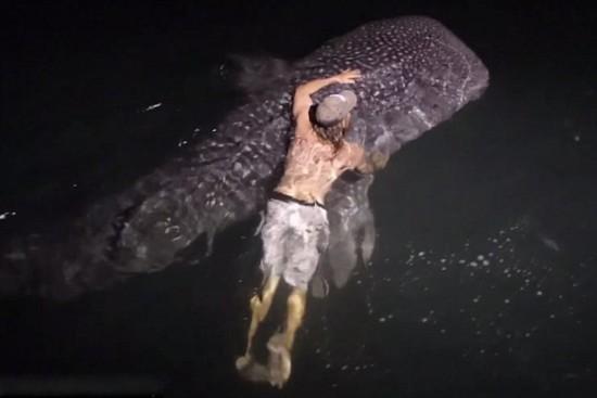 澳勇敢男子半夜跳海与巨鲨共游
