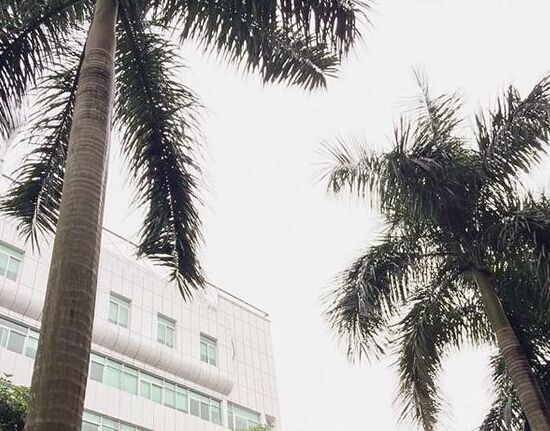 """江西频道 高清图库  原标题:男子被60斤椰树叶砸死 盘点""""躲不过""""的"""