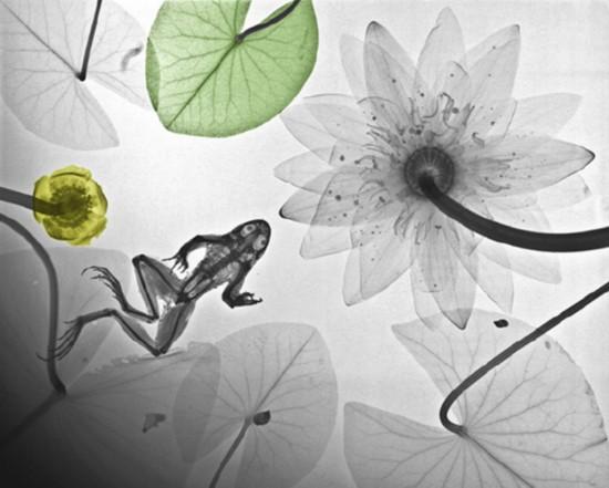 X光片暴露动物惊悚一面:猴子几乎与人类形态相同【4】