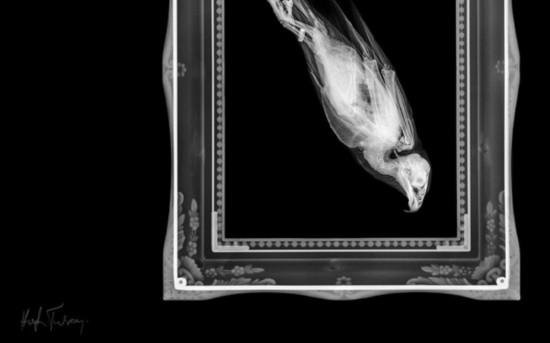 大跌眼镜!X光片暴露惊悚动物一面【组图】【13】