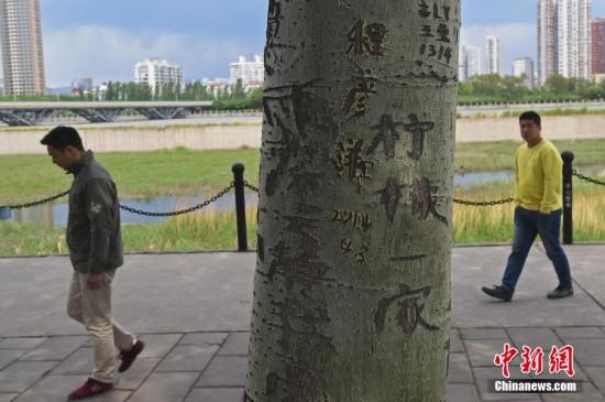 """5月11日,山西太原汾河景区,200余棵直径三四十厘米的杨树树干上,被刻满各类""""爱情誓言"""",甚至污言秽语。景区管理人员表示,游人破坏树木的不文明行为屡禁不止,现在景区已安排监察队员与保安人员加强巡查,希望广大游客文明游园,共同维护景区良好环境。武俊杰"""