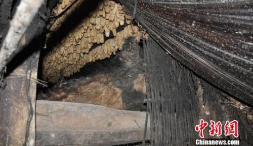 图为在犯罪嫌疑人王某弟家现场查获的大熊猫皮 云南省森林公安局供图 摄