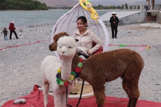 贵德县商家推出各种吸引人气的旅游互动产品
