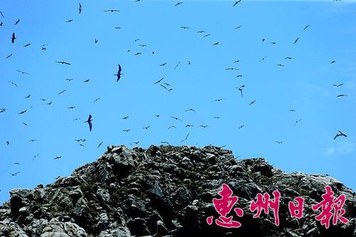 针头岩上空聚集的海鸟让小岛充满生气。