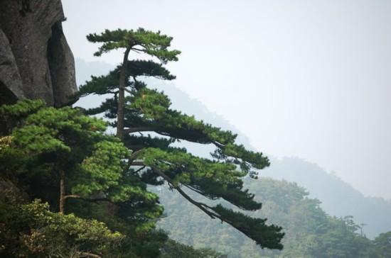 """相传,2100多年前,汉武帝刘彻封禅古南岳  天柱山时,设祭拜之""""明堂"""