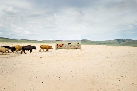 蒙古未来主义摄影警示草原荒漠化(图)【6】