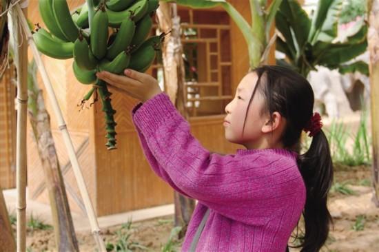 民和现代农业示范园热带水果让孩子们开眼界