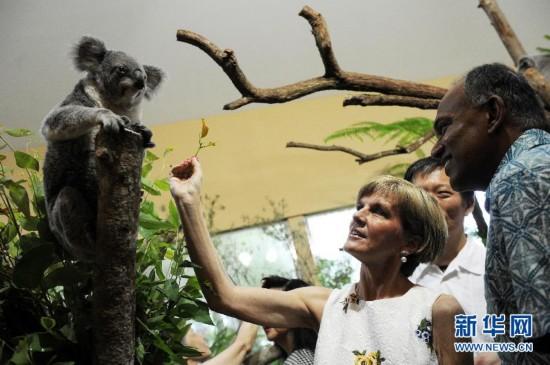 四只考拉在新加坡动物园亮相