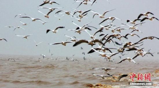"""高清:山东大口河自然保护区成为""""鸟类天堂"""""""