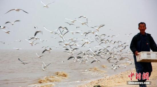 """高清:山东大口河自然保护区成为""""鸟类天堂"""" 【2】"""