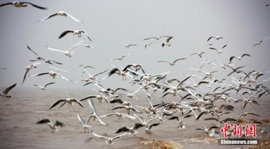 """高清:山东大口河自然保护区成为""""鸟类天堂"""" 【3】"""