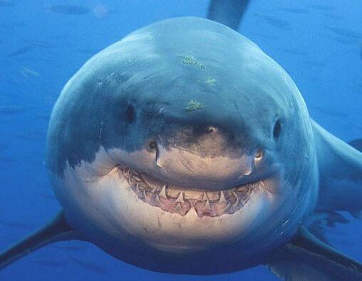 壁纸 动物 海洋动物 鱼 鱼类 桌面 508_394