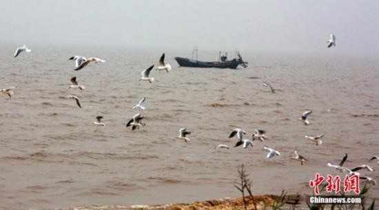 """高清:山东大口河自然保护区成为""""鸟类天堂"""" 【4】"""