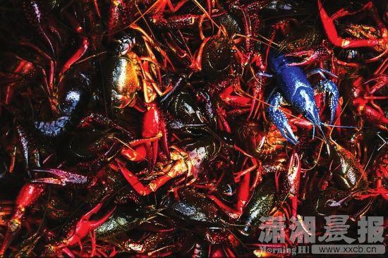 龙虾.jpg