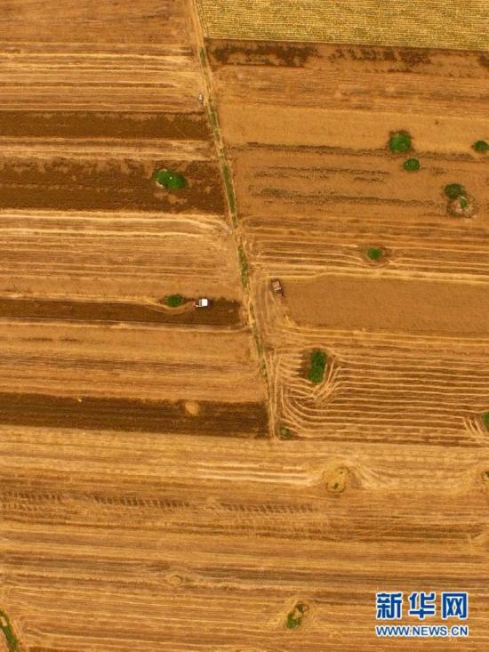 豫南等地进入麦收高峰 拉开河南麦收序幕