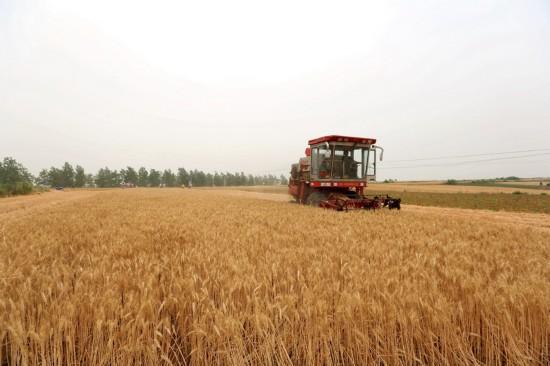 豫南等地进入麦收高峰 河南麦收拉开序幕