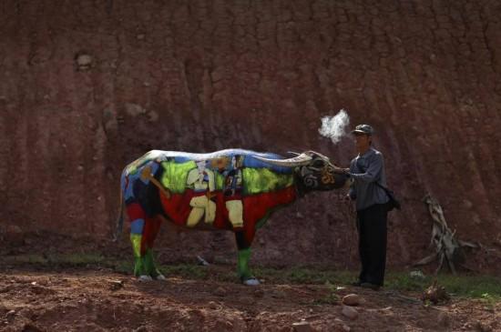 优优人体艺术网罗天下_云南省江城县,一个人体彩绘艺术者牵著他的画的水牛在抽烟.